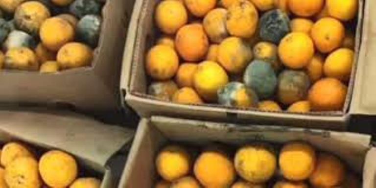 ضبط 27 طن فواكة وخضروات فاسدة  في مدينة العاشر من رمضان