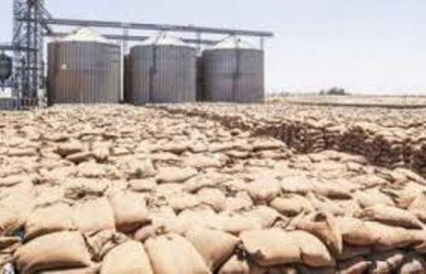 توريد القمح يرتفع لـ3.2 مليون طن وصرف 14 مليارا مستحقات المزارعين