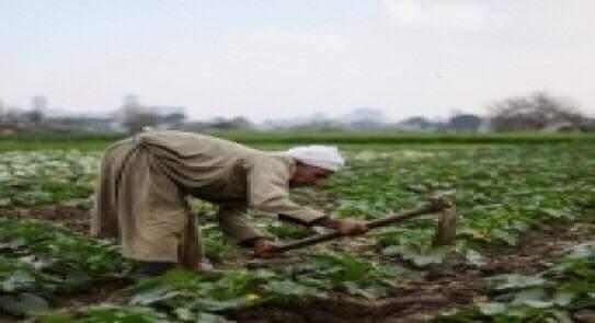 فيديو.. خبير زراعى يشدد علي ضرورة التنوع في مصادر المياه لتنفيذ مشروعات الأمن الغذائي