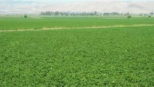 فيديو.. مزارعو المغرة يطالبون بتأجيل أقساط أراضيهم ٦ أشهر بعد تعرضهم لخسائر